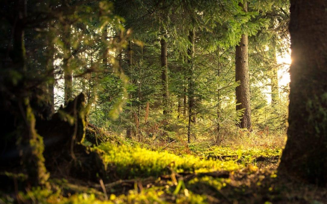Drumul lemnului din pădure până în casă