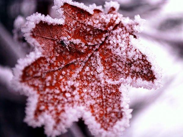 Iarna scoate le iveală secretele naturii