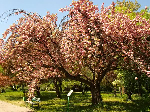 Primăvara e timpul să vizitați Grădina Botanică