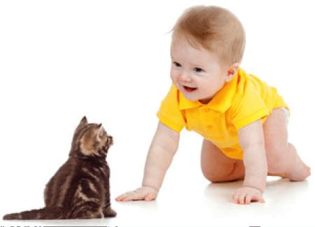 Animalele de companie, prietenii familiei