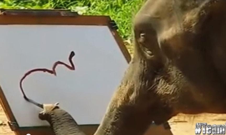 Suda – elefantul care pictează elefanți