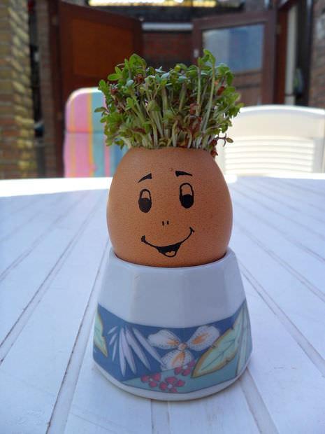Ou cu păr, pardon, creson
